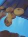 Makronen 2 / Öl auf Kunstspanplatte / 77x58cm / 2004