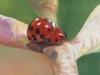 dem Glück auf der Spur / Öl auf Baumwolle / 90x120cm / 2004