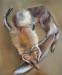 Fuchsen1_120x100cm_Öl auf Baumwolle_2020