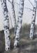 aus der Serie Treibholz / Mischtechnik auf Papier / 70x50 / 2012